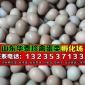 野鸡蛋能卖多少钱一个_野鸡蛋多少钱一个批发价格货到付款